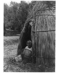 Construction of a Tule Shelter--lake Pom... by Curtis, Edward S.