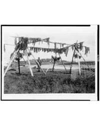 Drying Whale Meat--hooper Bay by Curtis, Edward S.