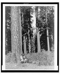 In the Forest--klamath by Curtis, Edward S.
