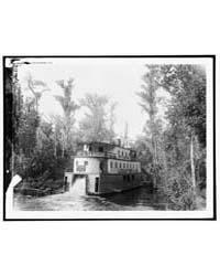 On the Ocklawaha , Florida, Photograph 4... by Jackson, William Henry