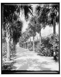 Ocean Walk, Palm Beach, Florida, Photogr... by Jackson, William Henry