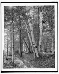 On Riverside Path, White Mts., N.H., Pho... by Library of Congress