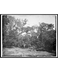 An Orange Grove on the Halifax, Fla., Ph... by Jackson, William, Henry