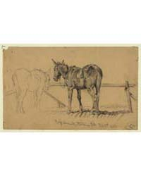A Tough Customer. Army Mule, Photograph ... by Forbes, Edwin