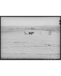 Spring Plowing Maryland, Photograph 8B14... by Library of Congress
