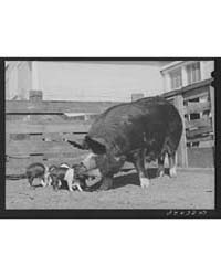 Untitled : Photograph 8B16349V, 1935 by Library of Congress