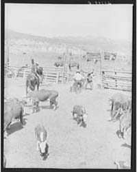 Branding William Tonn Ranch, Custer Coun... by Library of Congress