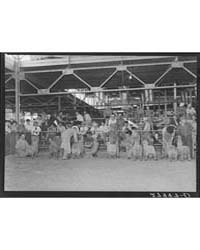 Judging Shropshire Sheep Iowa State Fair... by Library of Congress