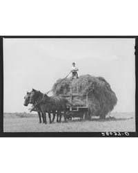 Howard Kimberley on Hay Wagon Jasper Cou... by Library of Congress
