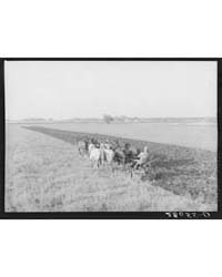 Plowing with Ten-horse Team Ryken Farm, ... by Library of Congress