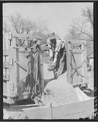 Unloading Shelled Corn for Ever-normal G... by Library of Congress