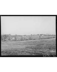 Some of the Fifteen Acre Subsistence Far... by Library of Congress