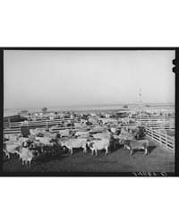 Untitled : Photograph 8B23502V, 1935 by Library of Congress