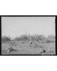 Clearing Land Which will Be Used for Tru... by Library of Congress