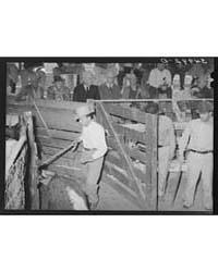 Gate Opening Into Livestock Auction Ring... by Library of Congress