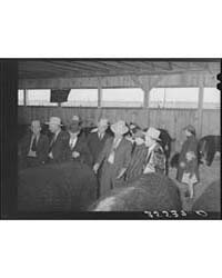 Visitors Admiring Prize Beef Steers at t... by Library of Congress