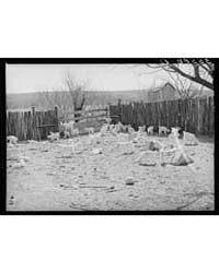 Kids in Corner of Stockade on Ranch in K... by Library of Congress