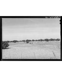 Goats Grazing on Ranch of Rehabilitation... by Library of Congress