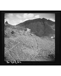 Eroded Tobacco Slope with Jibaro House P... by Library of Congress