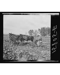 Sugar Beet Worker Colorado, Photograph 8... by Library of Congress