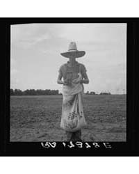 Farm Boy with Sack Full of Boll Weevils ... by Library of Congress