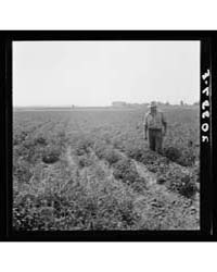 Untitled : Photograph 8B34334V, 1935 by Library of Congress