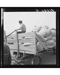Hop, Transported from Field to Kiln Near... by Library of Congress