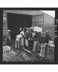 Grading Potatoes, Preparing for Shipment... by Library of Congress