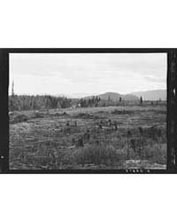 Part of Eighty-acre Farm Showing Cleared... by Library of Congress