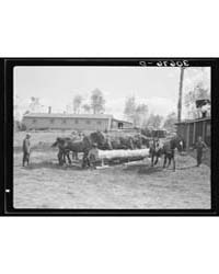 Horses Being Watered at Lumber Camp Near... by Library of Congress