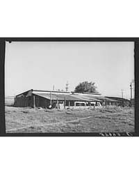 Chicken Houses of Jo Webster, Farmer in ... by Library of Congress