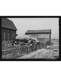 Barnyard Scene Hancock County, Ohio, Pho... by Library of Congress