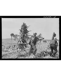 Loading Corn on a Farm Near Sheldon, Ver... by Library of Congress