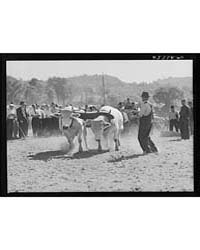 Weight-pulling Contest for Oxen at the W... by Library of Congress