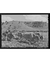 Guanica, Puerto Rico (Vicinity) Team of ... by Library of Congress