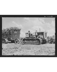 Sugarcane Being Hauled from the Fields t... by Library of Congress