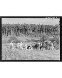 Tenants Shucking Corn in Field Person Co... by Library of Congress
