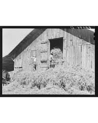 Loading Hay Into Barn on Tobacco Farm of... by Library of Congress