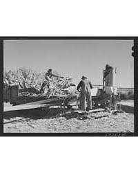 Filling the Trench Silo on Scottsbluff F... by Library of Congress