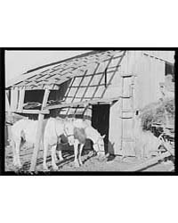 Team of Horses Bought by Joe Coperning w... by Library of Congress