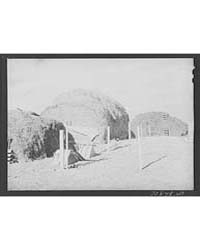 Hay Which will Be Used for Cattle Feed i... by Library of Congress