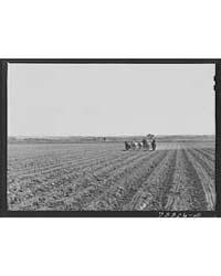 Planting Yuma County, Arizona, Photograp... by Library of Congress