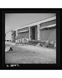 Children of Camp Members Playing Outside... by Library of Congress
