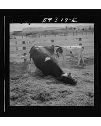 Untitled : Photograph 8C31743V, 1935 by Library of Congress