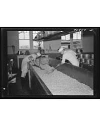 Stirring up the Curd So That the Whey Ca... by Library of Congress