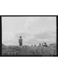 Dairy Farmer's Children on a Hay Stack N... by Library of Congress
