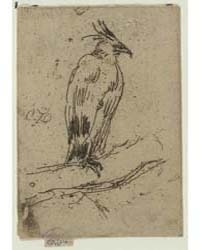 Black Eagle, Photographs 25318V by Whistler, James McNeill