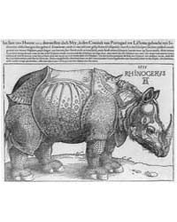 The Rhinoceros, Photographs 3B30851R by Dürer, Albrecht