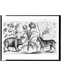 Boar, Mastiff, Thistle, Raspberries, Lil... by Hollar, Wenceslaus