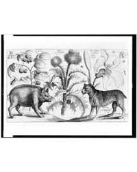 Boar, Mastiff, Thistle, Raspberries, Lil... by Hollar, Wenceslaus